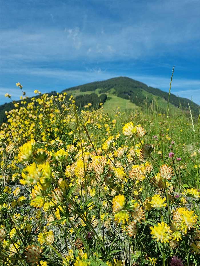 Blumenwiese - GArten der Jugendherberge Sonnegg